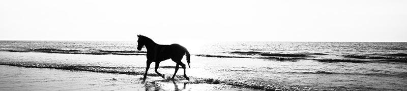 十二生肖——马
